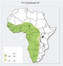 T11 - KU BAND